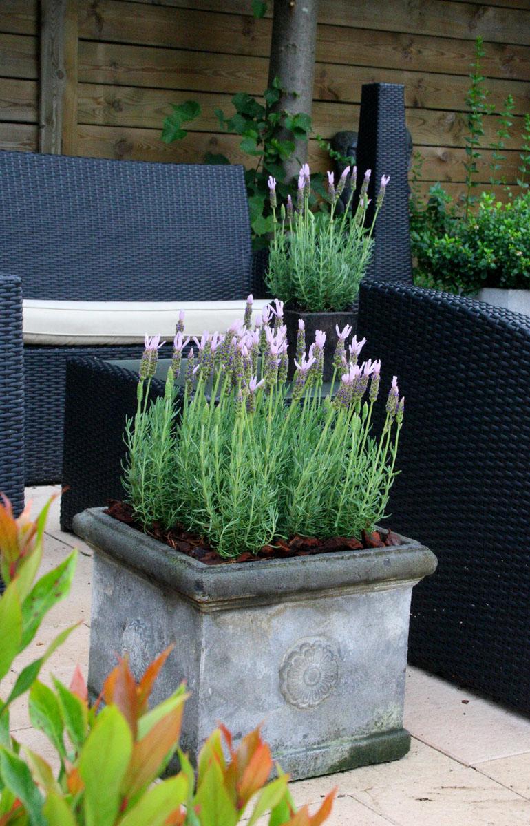 la collection globe planter lavande papillon lusi pink. Black Bedroom Furniture Sets. Home Design Ideas