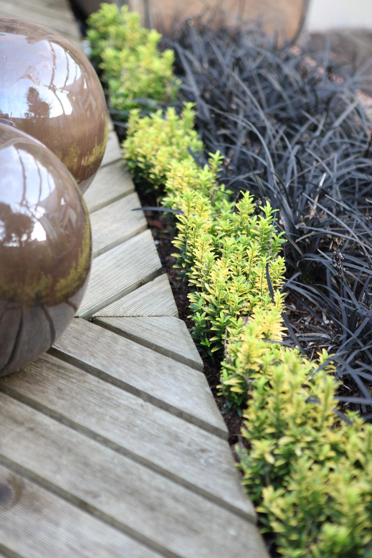 Arbuste Nain Persistant Plein Soleil la collection globe planter - fusain du japon - happiness