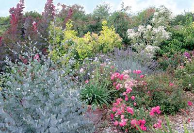 Globe planter - Un très beau jardin presque sans entretien